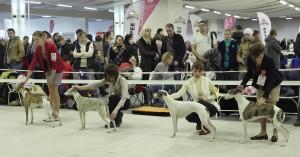 Балтик-Шоу и Невская Грация 2015