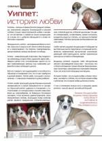 Собачья семейка. Уиппет: история любви