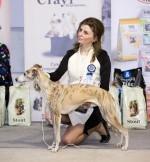 12.04.2015 Санкт-Петербург, выставка собак «Весенняя прогулка»