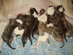 7 марта исполняется 2 года щенкам «М» помета, мартенятам!