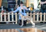 16.02.20 Новосибирск, 2 выставки собак