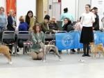 8 февраля 2020. Тюмень. Всероссийская выставка ранга САС-ЧФ